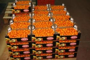 campaña del mango